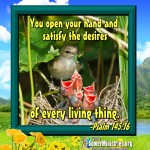 seeds_of_joy_graphic_5_28_14